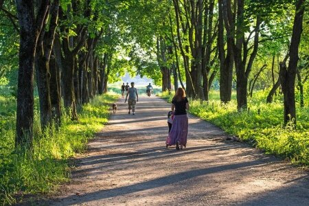 Комитет по архитектуре Дагестана разработал концепцию озеленения Махачкалы